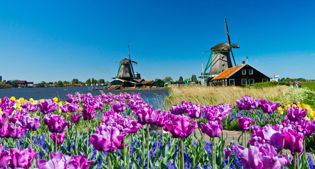 Dutch Bulbfields Cruise and Highlights of Holland